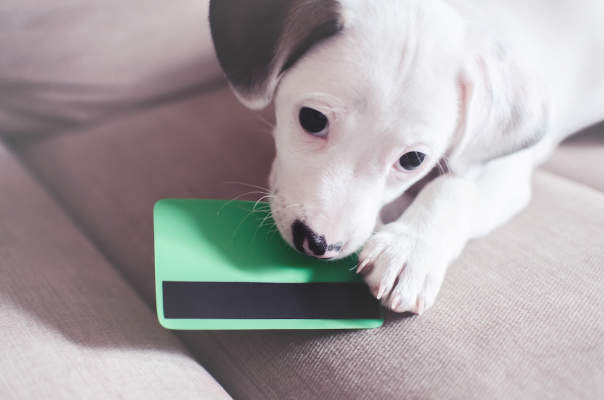 Canva - Small puppy dog , jack russell with credit card