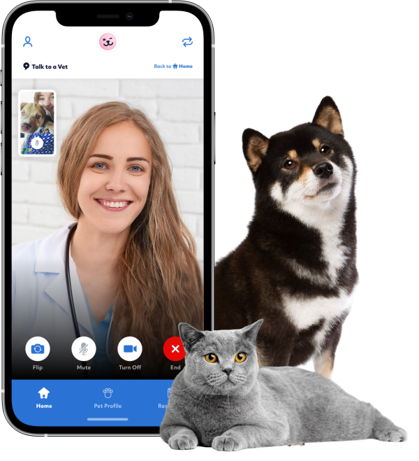 Vet video call with dog and cat