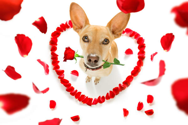 Canva - Happy Valentines Dog with Flower