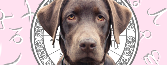 Your Dog's Weekly Horoscope 2020: August 17-23