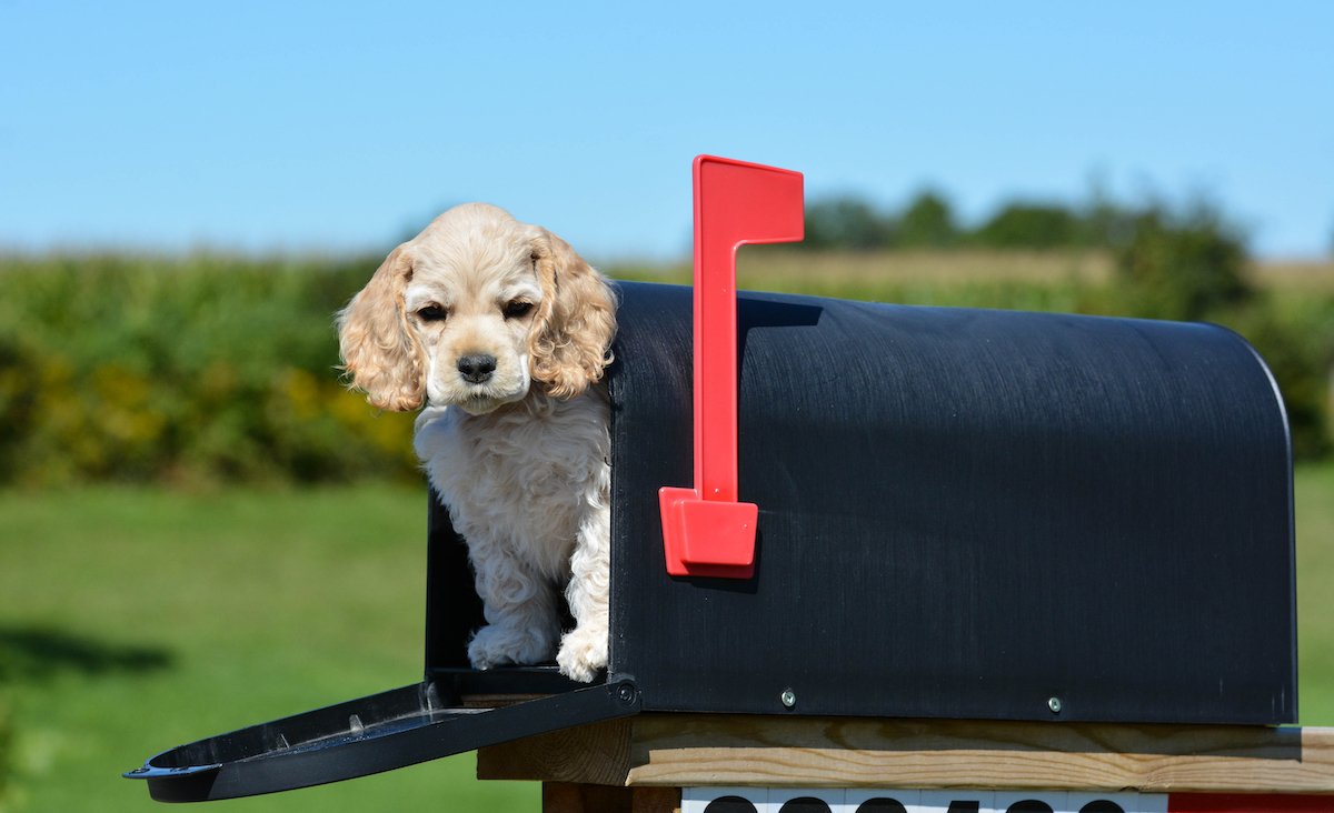 Canva - Puppy in a Mailbox