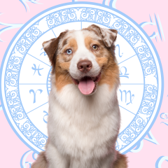 Your Dog's Weekly Horoscope 2020: June 15-21