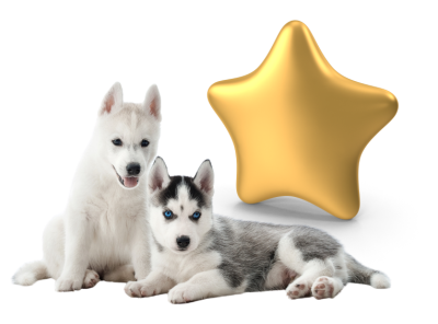 puppies and a gold star