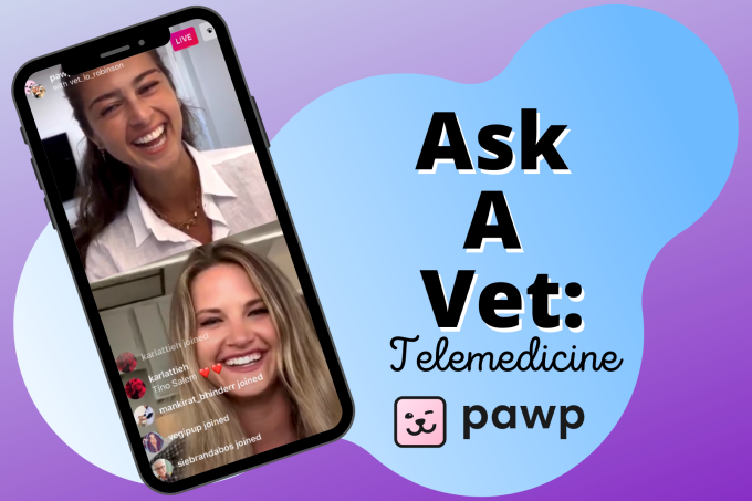 We Asked A Vet About Pawp's 24/7 Clinic, Texting A Vet & Telemedicine