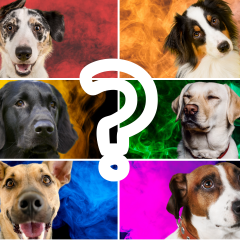 What Color Is Your Dog's Aura? Take The Quiz