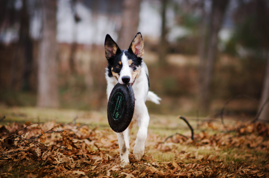 Canva - Dog park - Biting Frisbee Disc