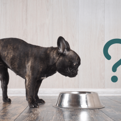 10 Best Dog Foods, Recommended By Vets & Pet Experts