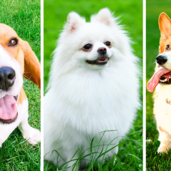 The *Perfect* Dog For You, According To Your Personality Type