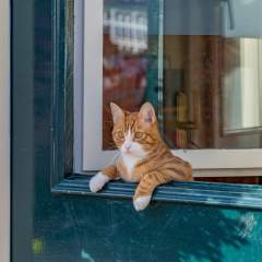 Indoor vs. Outdoor Cats: Exploring The Pros And Cons