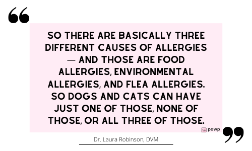 pawp-quote card-allergy-causes