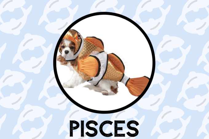Pisces Dog Personality: What Being A Pisces Says About Your Dog