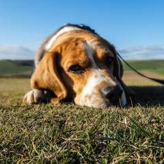 Dog Throwing Up? Reasons Your Dog Is Vomiting & How To Help