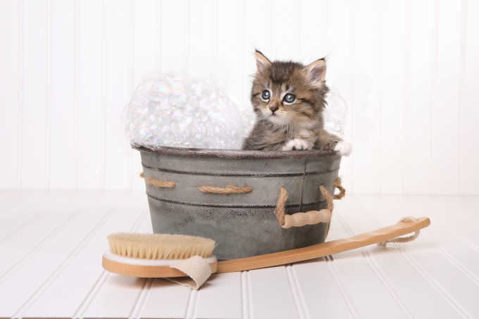 Cat Dandruff: Why Your Cat Has It & How To Get Rid Of It