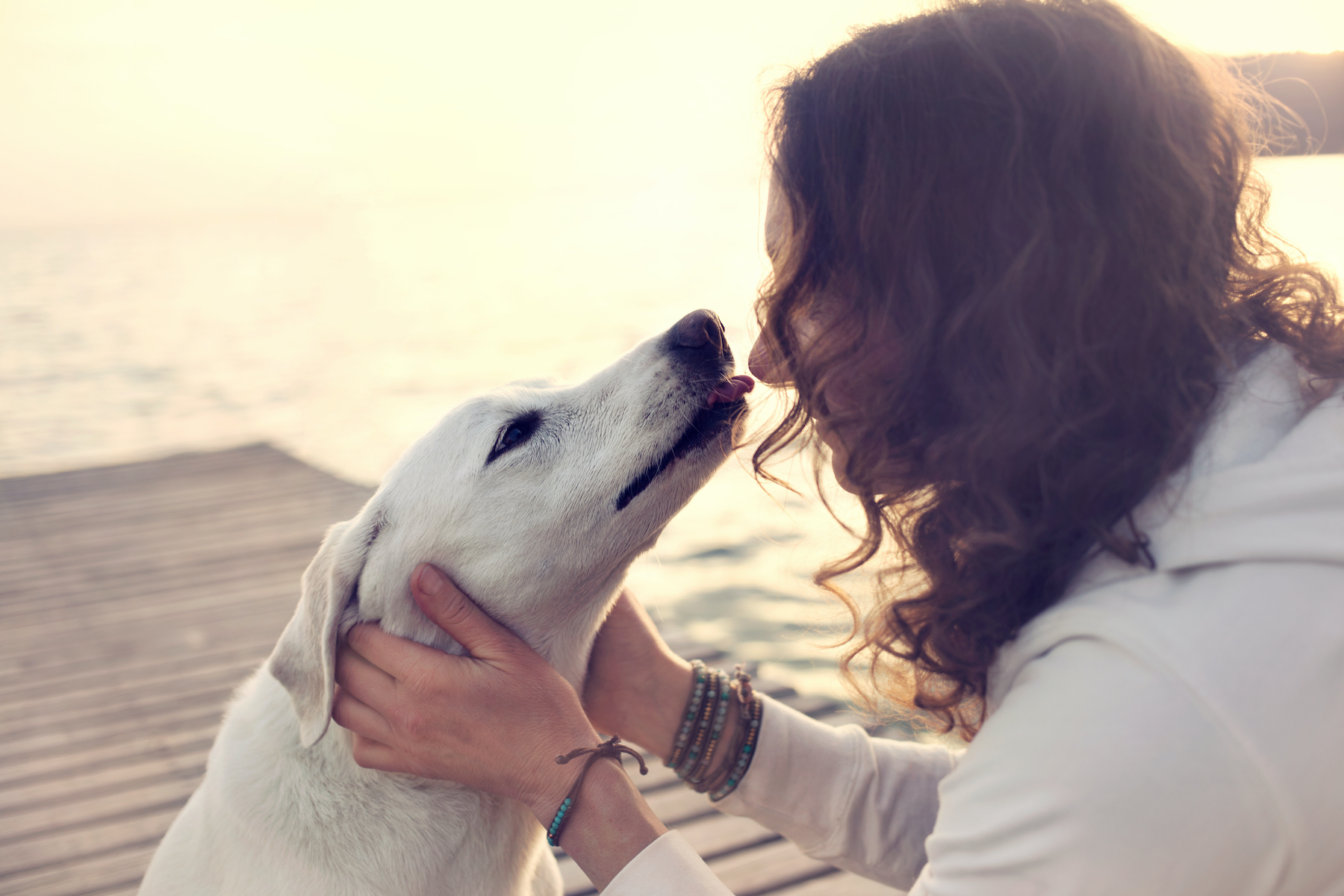 Canva - His owner dog licks gently, loving gesture