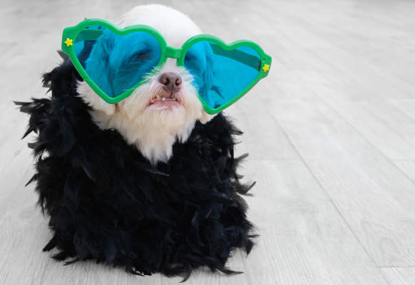 Canva - Glamorous dog wearing a fashion clothing with plumes