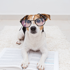 The 13 Smartest Dog Breeds
