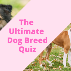 How Well Do You Know Your Dog Breeds? Take The Quiz