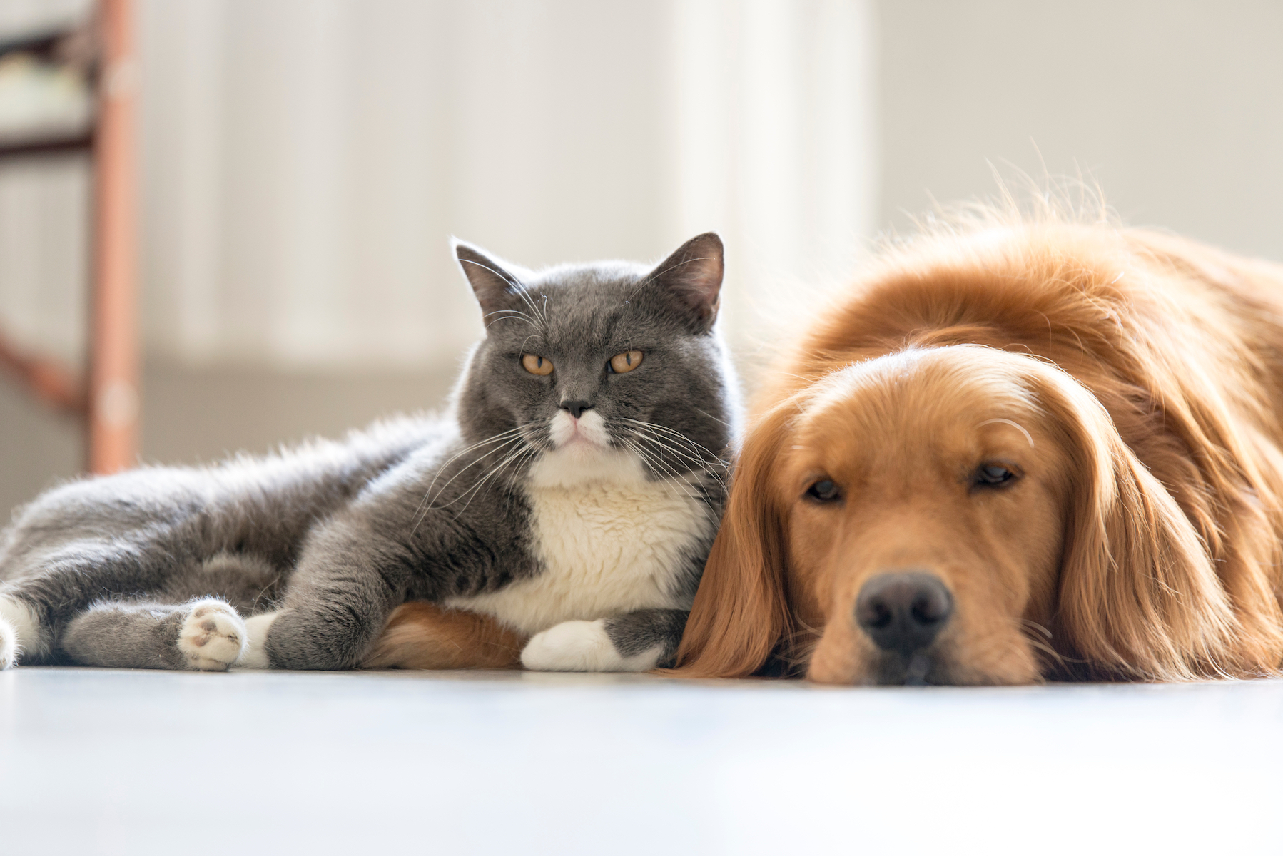 Canva - Dogs and cats snuggle together