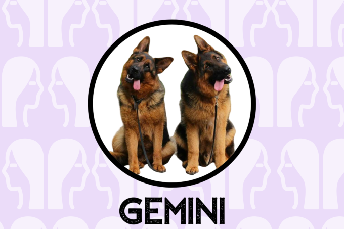 Gemini Dog Personality: What Being A Gemini Says About Your Dog