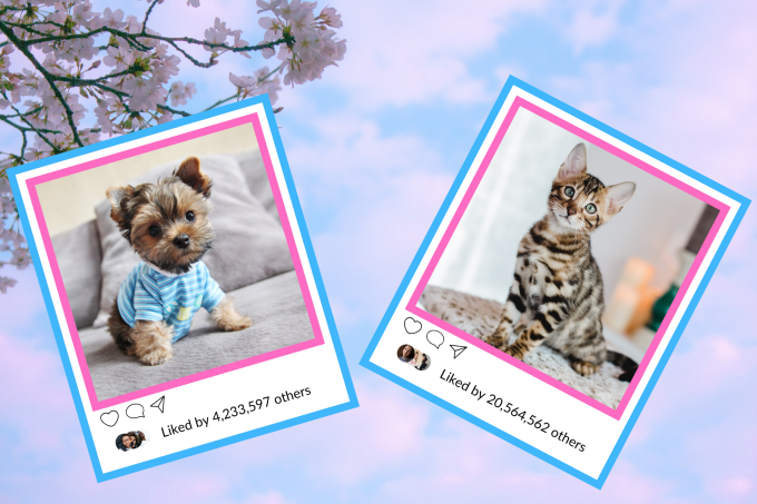 What Famous Instagram Animal You Are, According To Your Zodiac Sign