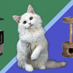 The 17 Best Cat Trees, Condos & Towers That Won't Cramp Your Decor