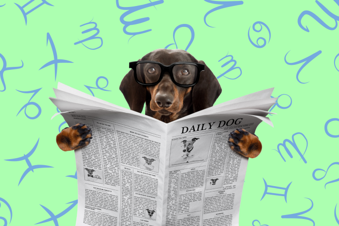 Your Dog's Weekly Horoscope 2020: February 10-16