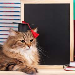 How Smart Is My Cat? Cat Intelligence And How We Measure It