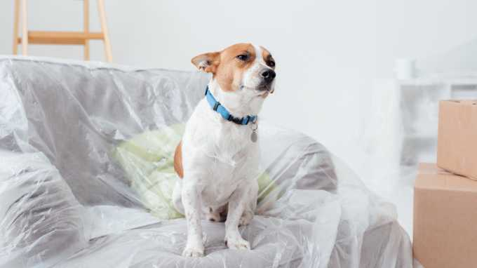 The Vanderpump-Approved Guide To Dog Adoption