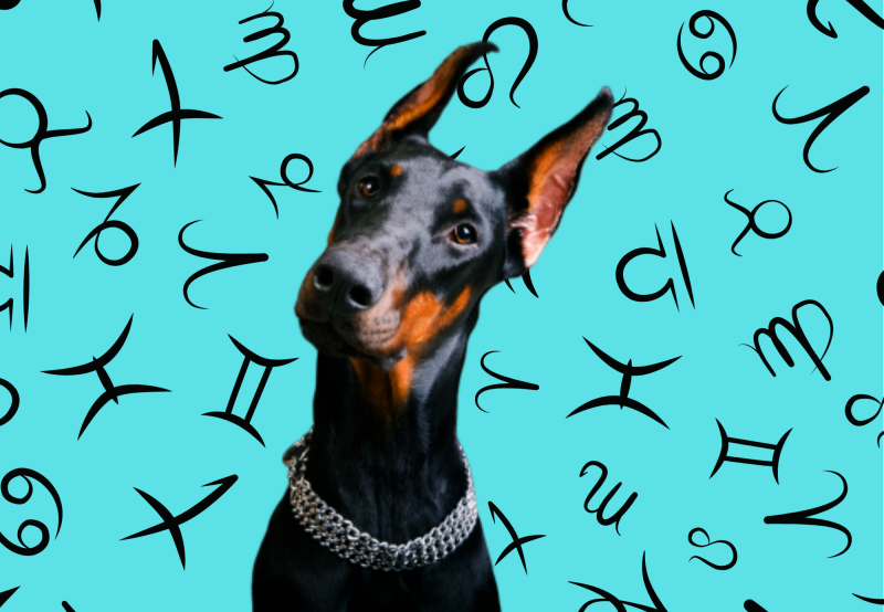 Your Dog's Weekly Horoscope 2020: January 20-26