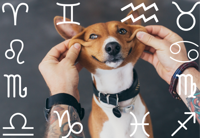 Your Dog's Weekly Horoscope 2019: November 25-December 1