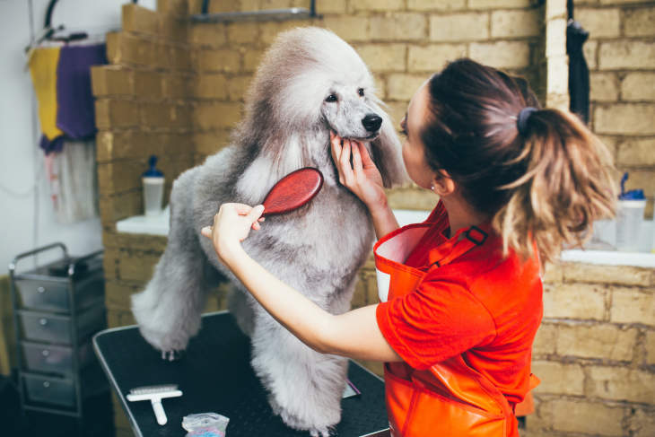 10 Best Dog Groomers in San Francisco For Your Dog