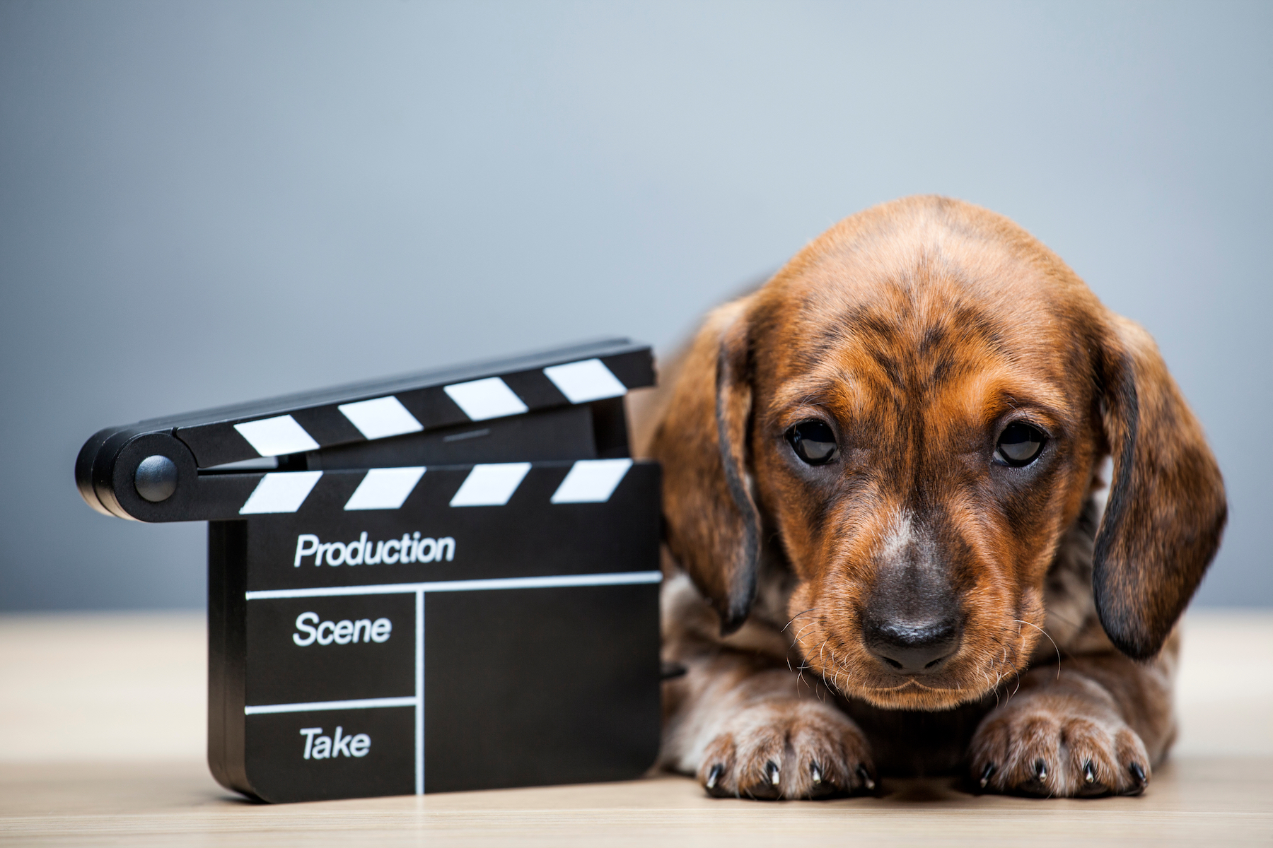 Canva - puppy portrait clapper board table