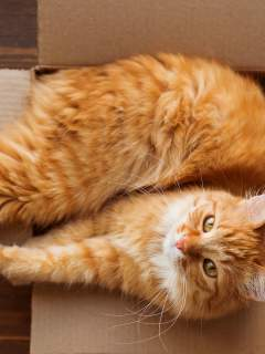 Why Do Cats Love Boxes More Than Humans?
