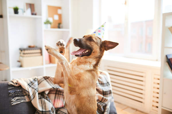 Canva - Doggie Birthday