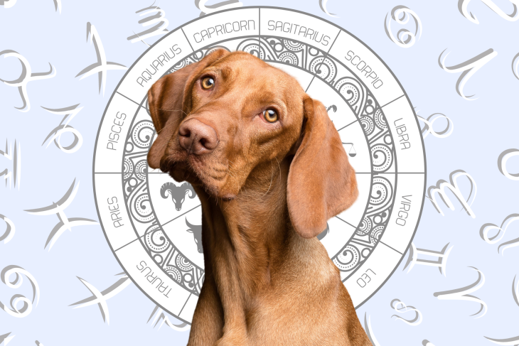 Your Dog's Weekly Horoscope 2020: June 8-14