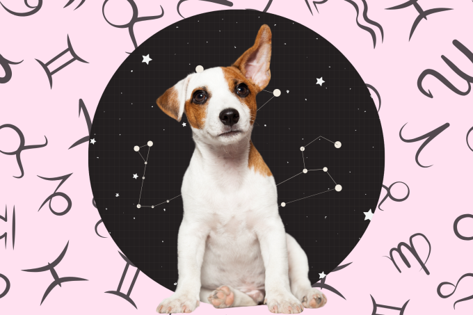 Your Dog's Weekly Horoscope 2020: May 4-10