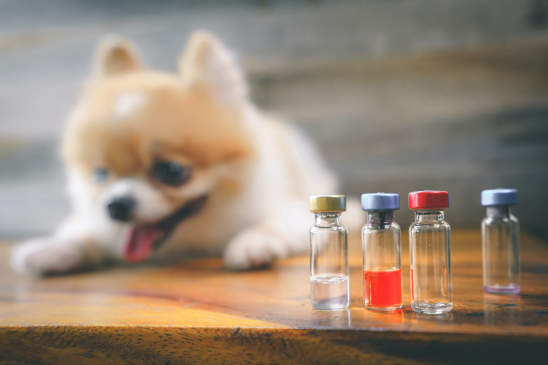 Canva - Veterinary medicine, pet, animals, health care and people concept - close up of vials and blur Pomeranian dog sitting on wood floor with syringe, drug injection or Rabies vaccination, wood background.