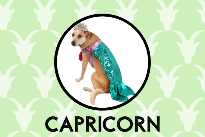 Capricorn Dog Personality: What Being A Capricorn Says About Your Dog