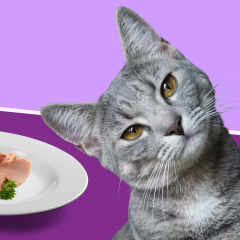 Homemade Cat Food: Recipe Ideas To Make Healthy Cat Food At Home