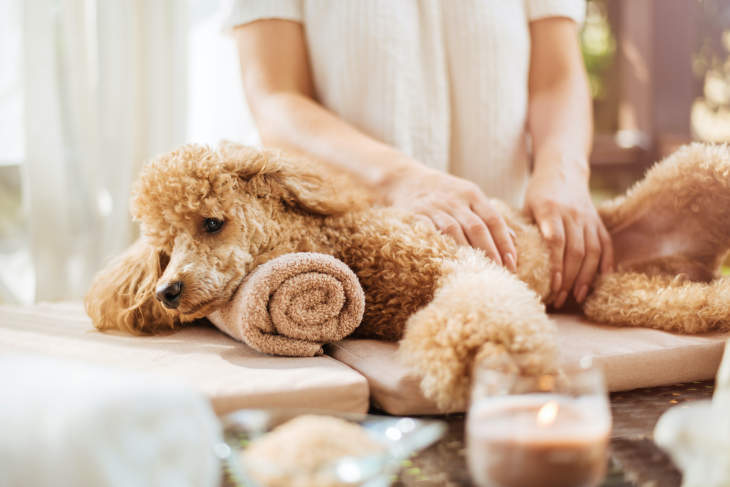 12 Things Your Dog Can Teach You About Taking The Ultimate Self-Care Day