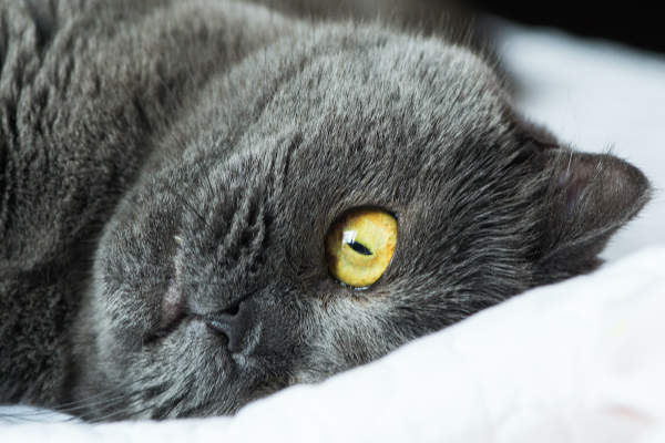Canva - Close Up Photo Of Black Cat