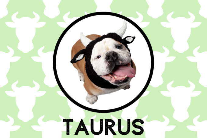 Taurus Dog Personality: What Being A Taurus Says About Your Dog