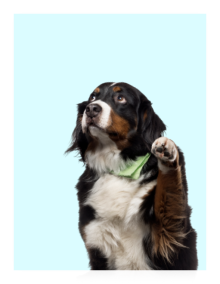 dog on a sky blue background