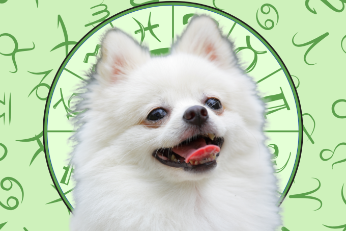 Your Dog's Weekly Horoscope 2020: April 20-26