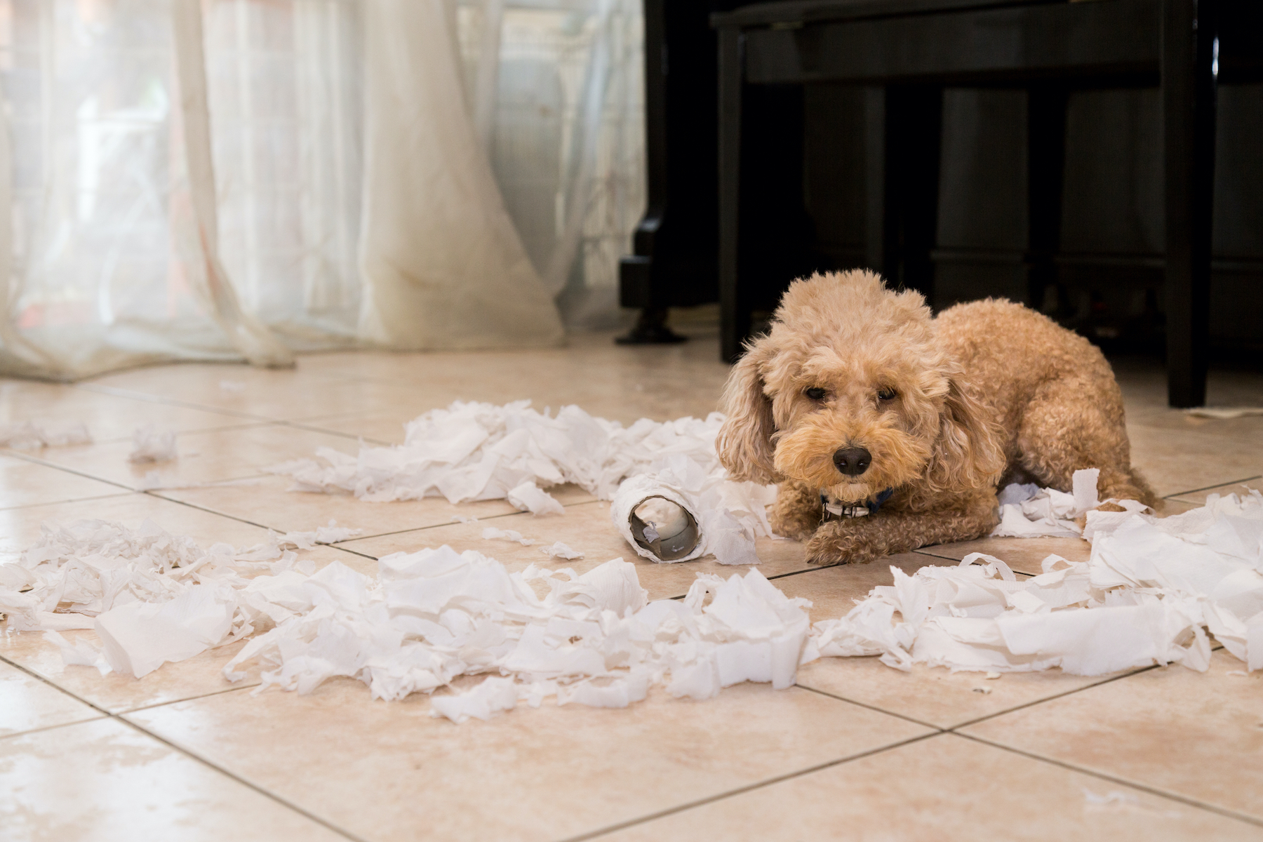 bored dog with ripped toilet paper