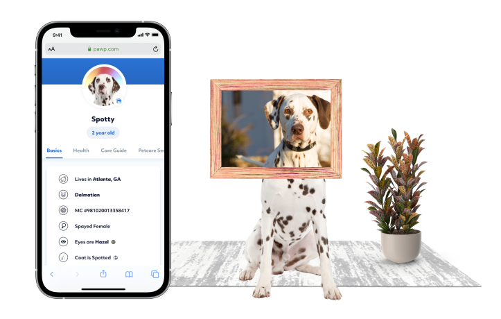 Pet Profile on a phone with Dalmatian