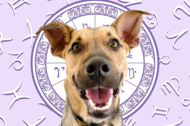 Your Dog's Weekly Horoscope 2020: August 3-9