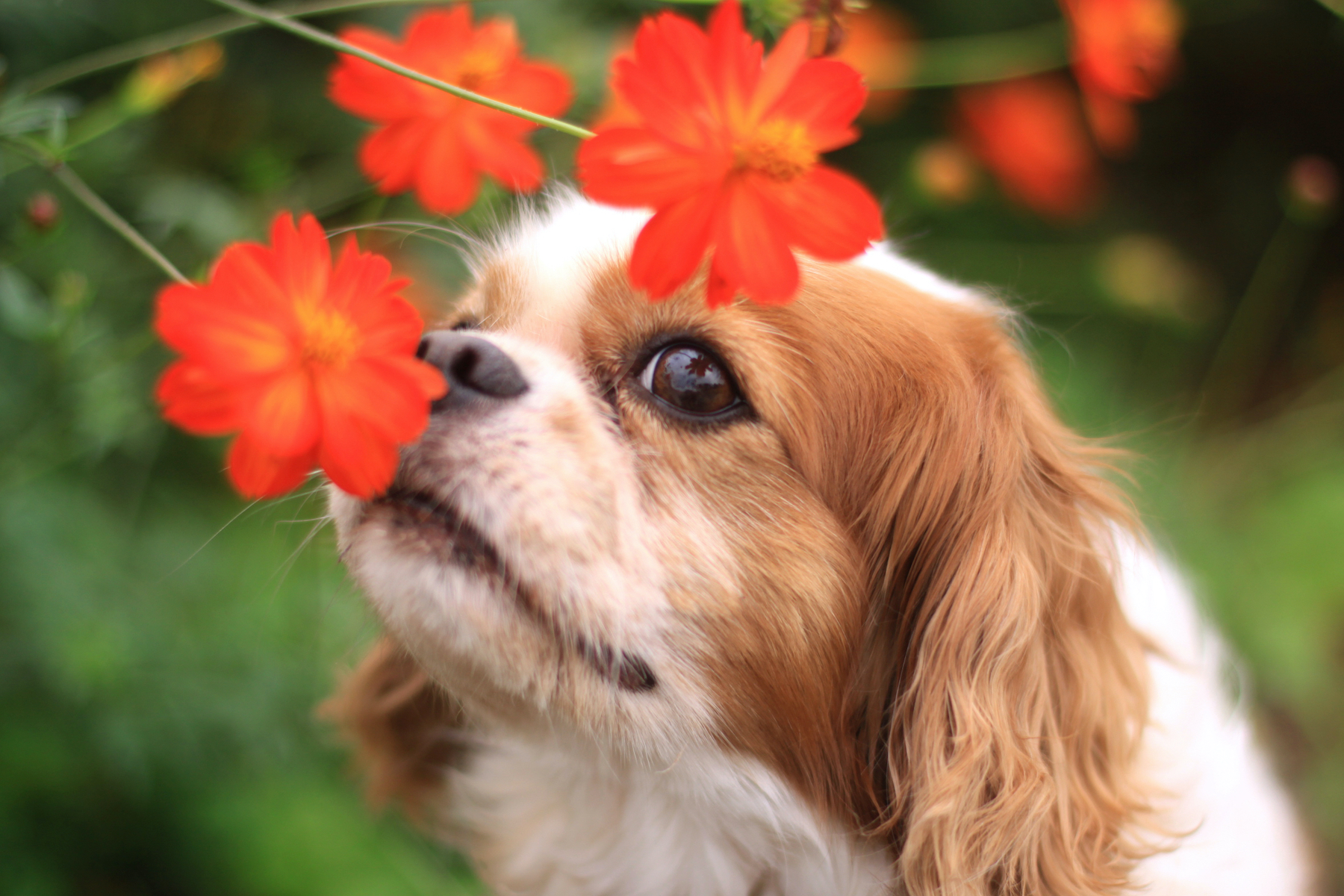 Canva - The dog of the smile and flowers