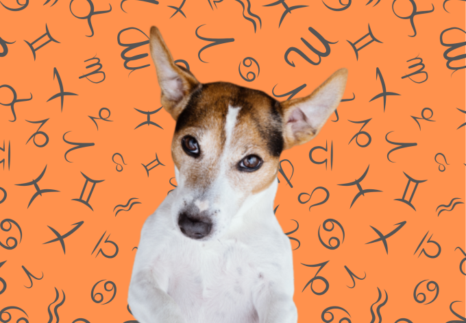 Your Dog's Weekly Horoscope 2020: December 30-January 5