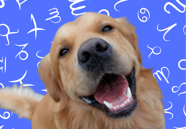 Your Dog's Weekly Horoscope 2020: January 6-12